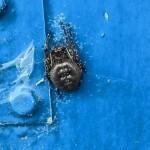 Platte wielwebspin (Irma de Graaff)